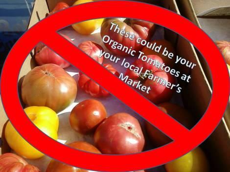 organic tomatoes1