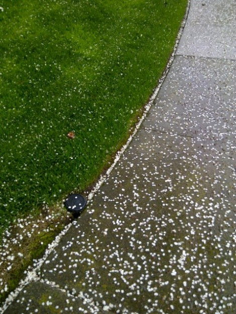 Picture of sidewalk during rain and littered with flower petals.