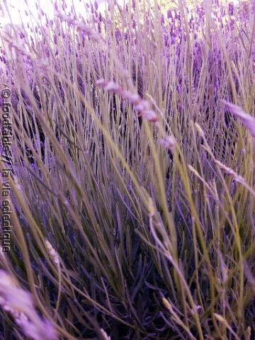 PhotoPro_20120525_0