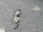 cat in costa rica