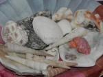 costa rica seashells