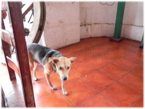 dog01 nicaragua