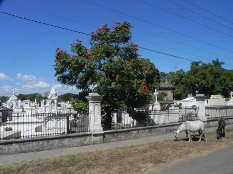 Another view of the Cementerio de Granada?