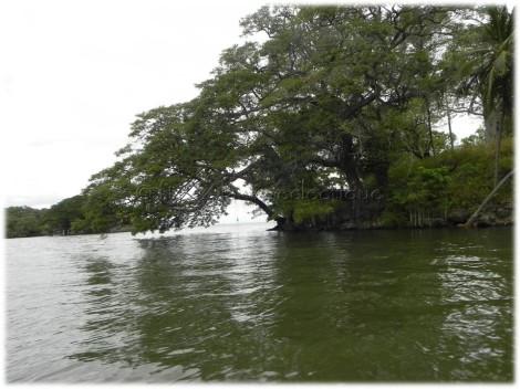 trees in lake nicaragua
