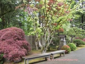 portland japanese garden01