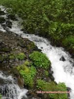 wahkeena falls 13